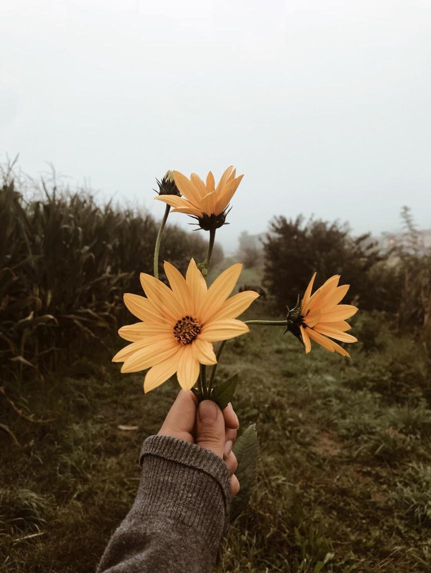 otoño de rendición (4)